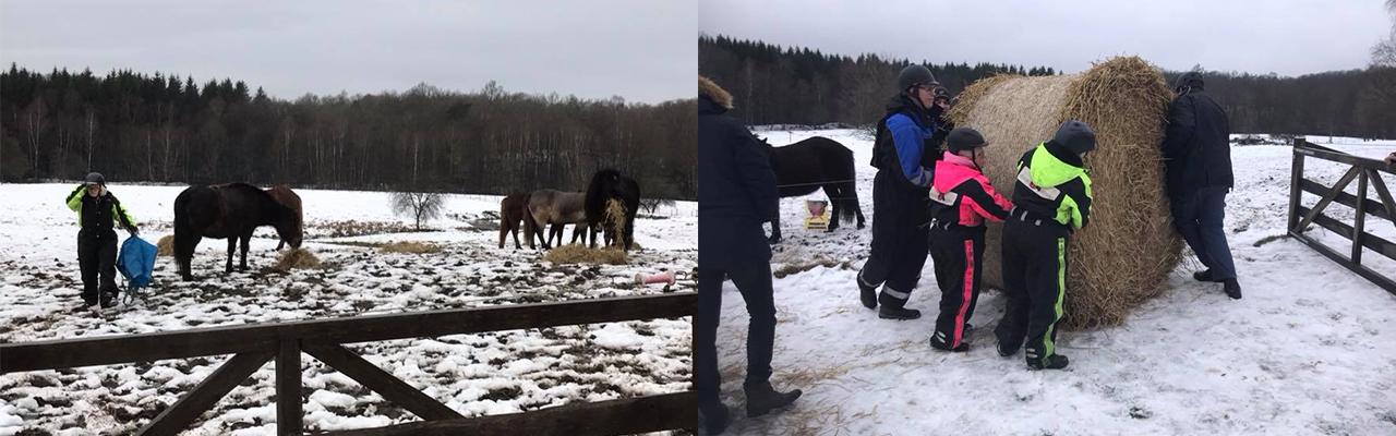 hästfoder2_klar